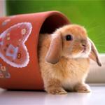 Esquemas de Conejos en Punto de Cruz