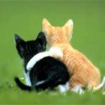 Esquemas de Gatos en Punto de Cruz