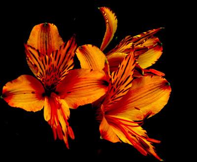 Esquema de Flor en Punto de Cruz (11)