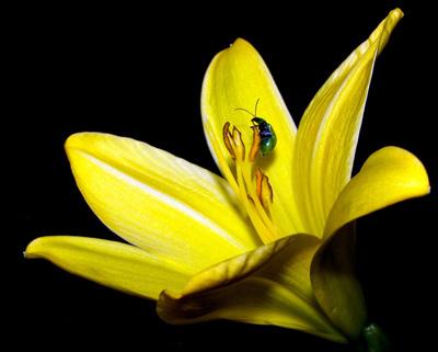 Esquema de Flor en Punto de Cruz (12)