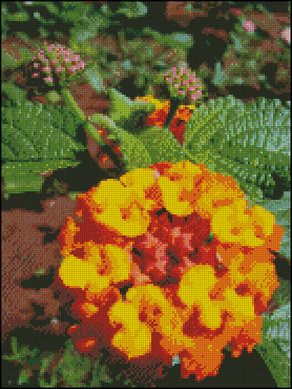 Esquema de Flor en Punto de Cruz (13)