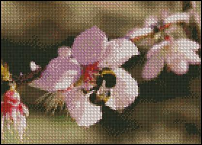 Esquema de Flor en Punto de Cruz (14)