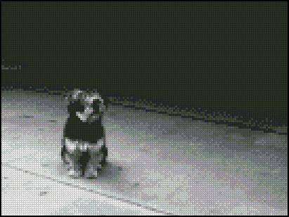 Esquema de Perros (1)