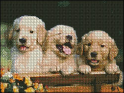 Esquema de Perros (5)