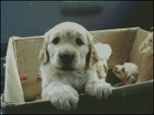 Esquema de Perros (7)